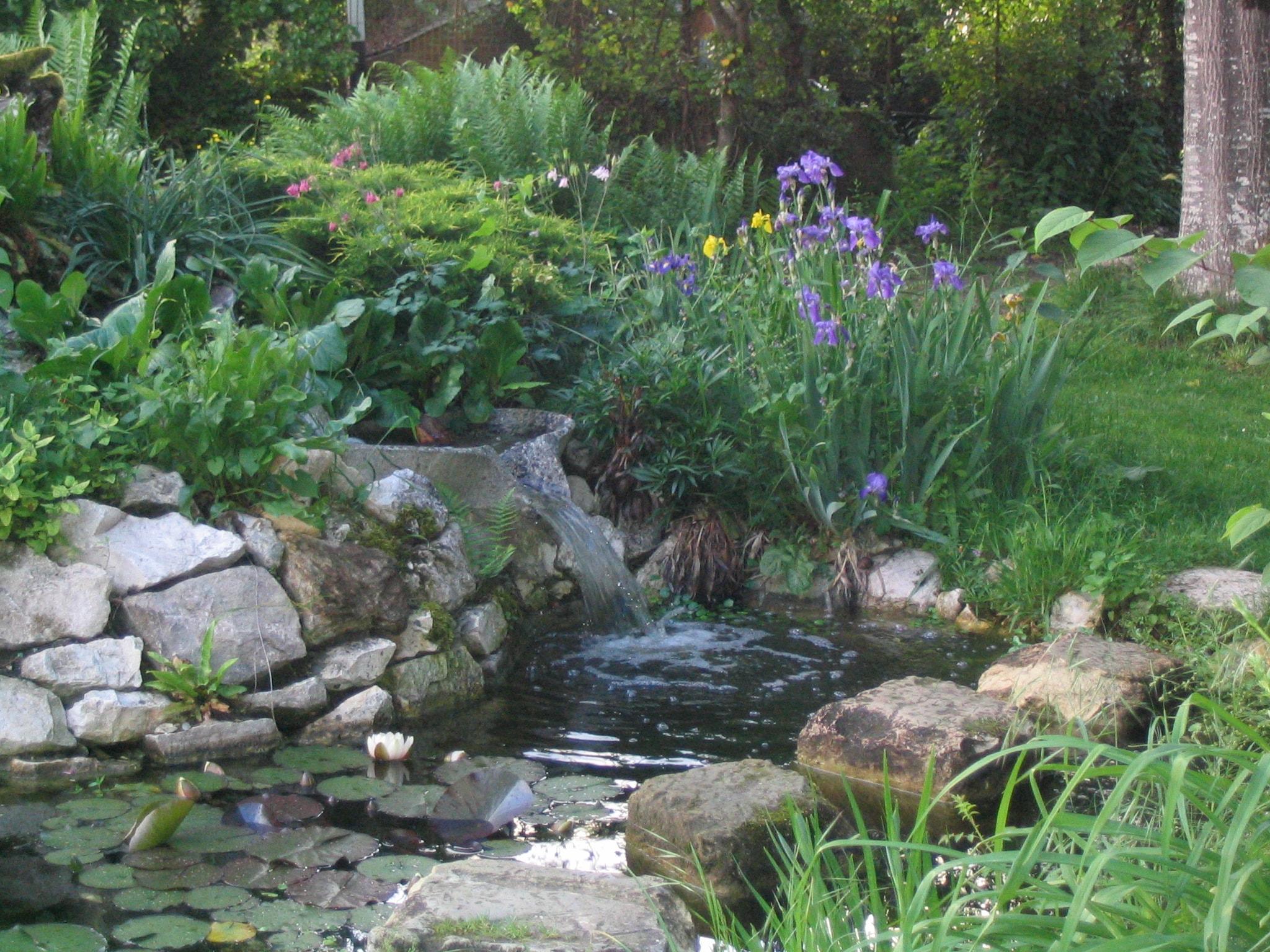 Cascade de vasques vives sur rocaille